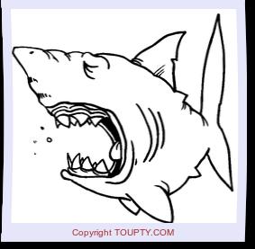 Requin Coloriage De Requins A Imprimer Coloriages Toupty Com