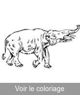 Animaux Prehistoriques Coloriage Animal Prehistorique Toupty