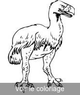 Coloriage Bebe Autruche.Animaux Prehistoriques Coloriage Animal Prehistorique Toupty
