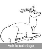 Coloriage Famille Africaine.Antilope Coloriages Antilopes A Imprimer Toupty Com