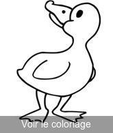 Coloriage canard canard pilet coloriage dessin de canards imprimer u voir le dessin imprimer - Canard dessin facile ...