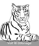 Coloriage Tigre.Fauve Coloriages Fauves A Imprimer Toupty Com