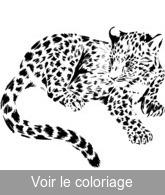 Coloriage Bebe Felin.Fauve Coloriages Gratuits A Imprimer De Fauves Toupty Com