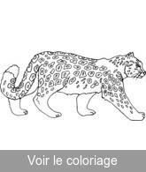 Coloriage Bebe Leopard.Fauve Coloriages Gratuits A Imprimer De Fauves Toupty Com