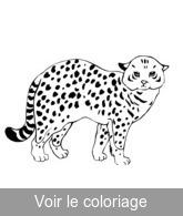 Coloriage Bebe Leopard.Fauve Coloriages Fauves A Imprimer Toupty Com