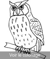 Hibou Coloriages Hiboux Toupty Com