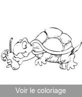 Tortue coloriage tortues mignonnes et rigolotes - Image tortue rigolote ...