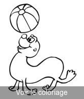 Coloriage Ballon Pdf.Phaque Otarie Coloriage Phoques Otarie Et Morse