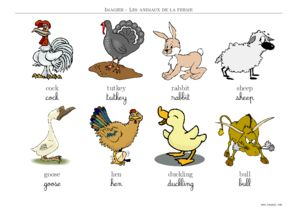 Imagier animaux de la ferme a imprimer - Imagier animaux de la ferme ...