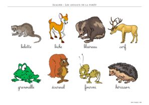 image animaux foret
