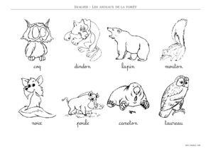 Coloriage Animaux Foret Maternelle.Imagier Animaux De La Foret A Imprimer Toupty Com